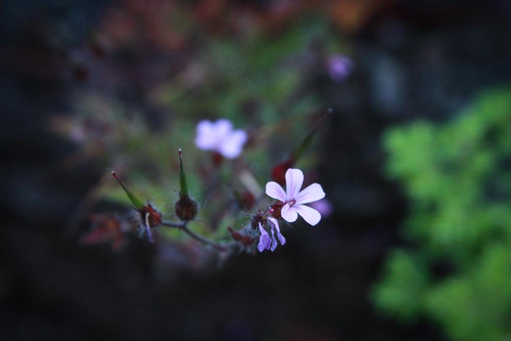 andrewmyoungphoto-7819