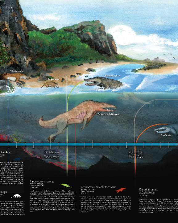 Evolution of Whales Mural